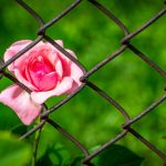 Затворниците и прогресивната нагласа